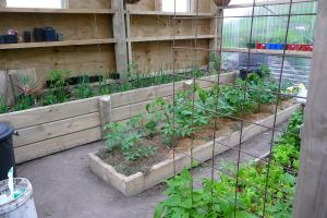 greenhouse_raised_beds